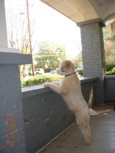 watchdog